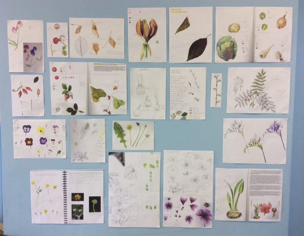 Aspire - Student work botanical sketchbook pages
