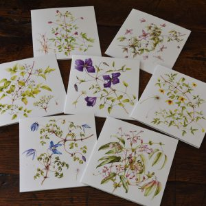 Pack-of-7-Clematis-cards
